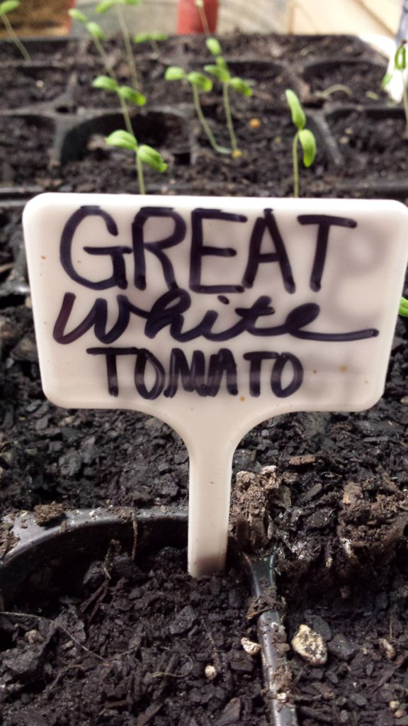You can make free seedling labels out of all kinds of things. Click to see more ideas for free and cheap labels for your plants. Owning Burton Farm and Misfit Gardening are teamed up for a Frugal Gardening Series. Come see what we're up to and get your garden started!