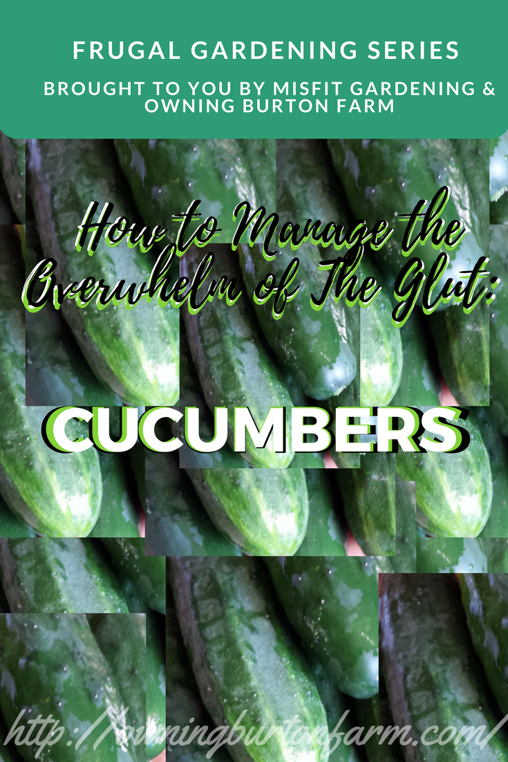 What to do with all those cucumbers! The cucumber glut is upon us. This post in our Frugal Gardening Series will give you some great ideas to get you in and out of the kitchen in a hurry, with some delicious and refreshing ideas to consume those cucumbers! Pin for later or click through to use up your cucumbers now!
