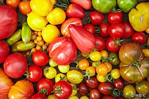Tomatoes ...How to manage the overwhelm of the glut of your tomato harvest -- Come take a look at all the great ideas for using up that tomato deliciously! Sign up to see our glut posts on zucchini and cucumbers, too.